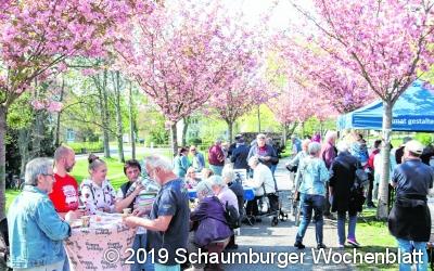 Das Kirschblütenfest wird  zur echten Punktlandung