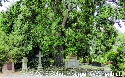 Große Äste fallen auf Friedhofsweg