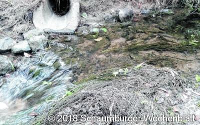 Wasserpflanzen verstopfen die Durchlässe des Haster Baches