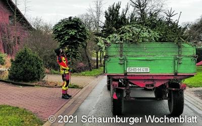 Tannenbäume sammeln