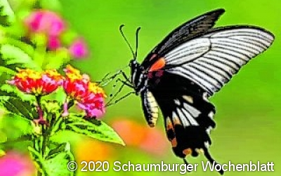 Schmetterlinge hautnah erleben
