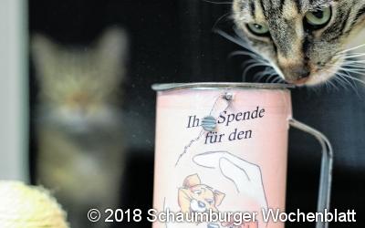Spendendose des Tierschutzes geklaut