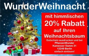 Himmlischer Rabatt 20 % beim Kauf Ihres Weihnachtsbaums